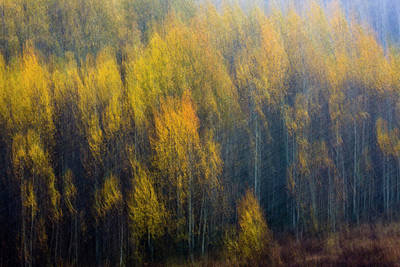 Photograph - Blurry Aspens by Whit Richardson