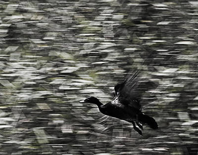 Art Print featuring the photograph Blurry Bird by Ron Dubin