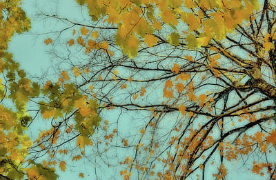 Photograph - Blurry Fall by JAMART Photography