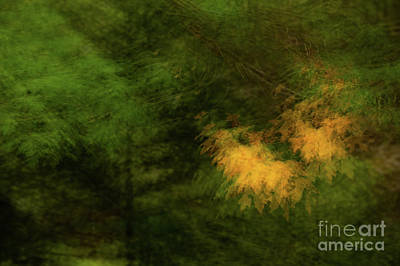 Photograph - Blurry Forest Abstract by Jason Brown