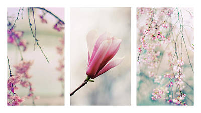 Print featuring the photograph Blush Blossom Triptych by Jessica Jenney