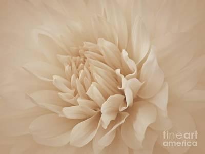 Photograph - Blush by Patricia Strand