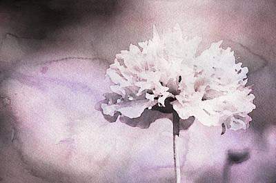Mixed Media - Blush Pink Carnation by Susan Maxwell Schmidt