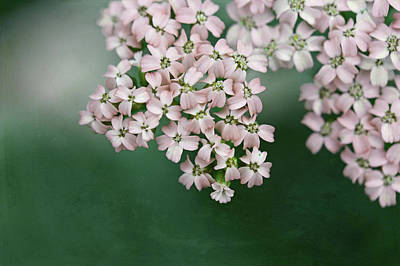 Photograph - Blush Pink Flowers On Emerald Green by Brooke T Ryan
