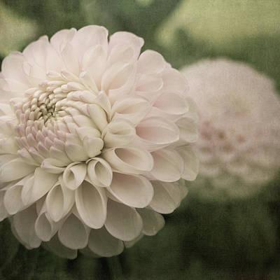 Photograph - Blush by Sally Banfill