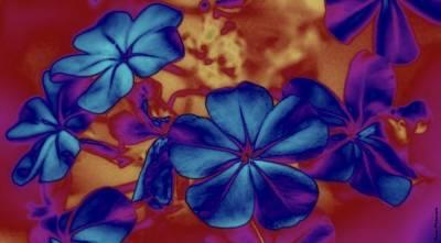 Digital Art - Blush by Wesley Nesbitt
