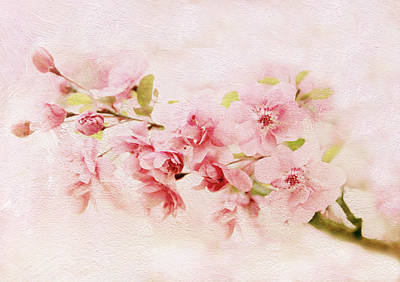 Photograph - Blushing Blossom by Jessica Jenney