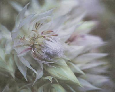 Photograph - Blushing Bride 5965 by Teresa Wilson