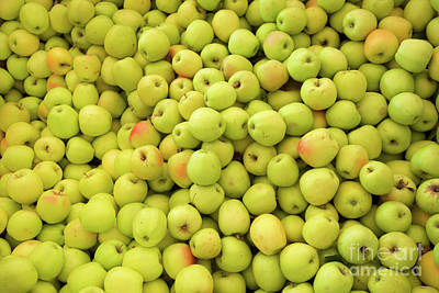 Photograph - Blushing Golden Apples by Bruce Block