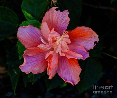 Photograph - Blushing Hibiscus by Craig Wood