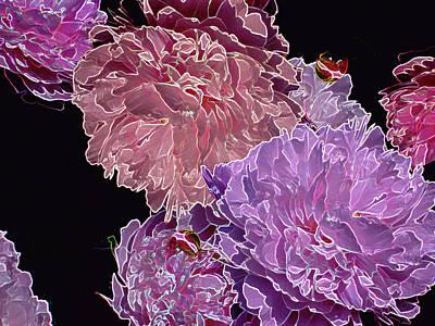 Digital Art - Blushing Peonies 6  by Lynda Lehmann