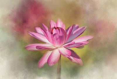 Photograph - Blushing Pink by Kim Hojnacki
