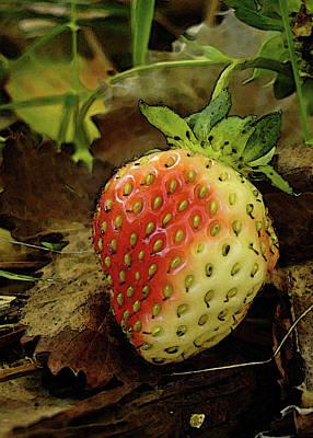 Photograph - Blushing Strawberry by Margie Avellino