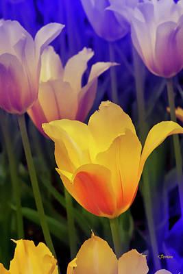Blushing Tulips Art Print by Kat Besthorn