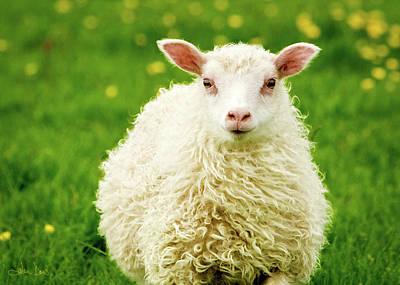 Photograph - Bo Peep's Sheep by Joan Davis