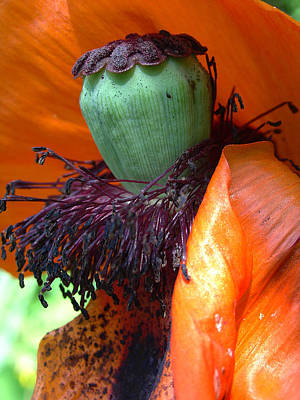 Photograph - Boa And Bonnet Of Madame Poppy by Terrance DePietro