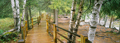 Tree Roots Photograph - Boardwalk Along A River, Gooseberry by Panoramic Images