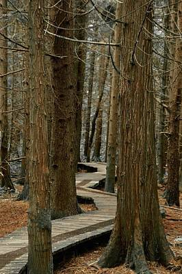 Photograph - Boardwalk Among Trees by Scott Holmes