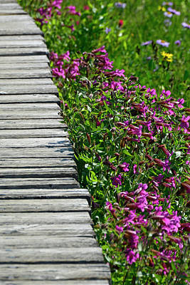 Photograph - Boardwalk And Flowers In Glacier National Park by Bruce Gourley