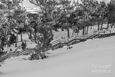 Photograph - Boardwalk Climbing A Hill by Sue Smith