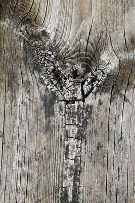 Photograph - Boardwalk Cobra by Mary Bedy