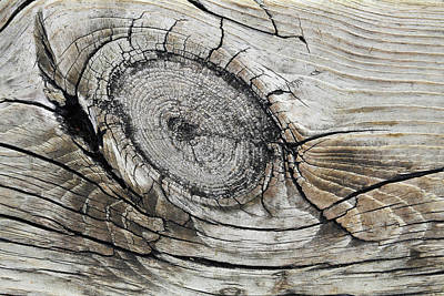 Photograph - Boardwalk Creature 2 by Mary Bedy
