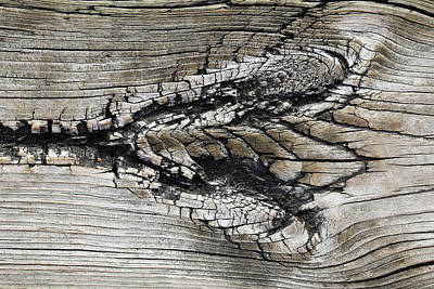 Photograph - Boardwalk Creature 3 by Mary Bedy