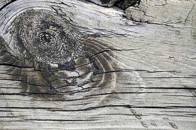 Photograph - Boardwalk Creature 6 by Mary Bedy