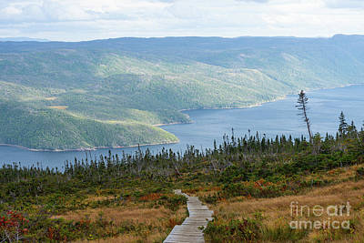 Photograph - Boardwalk In Gros Morne by Les Palenik