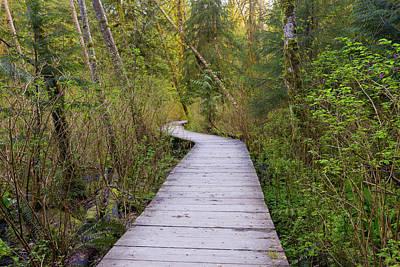 Photograph - Boardwalk In Lynn Canyon Park by Jaden Nyberg