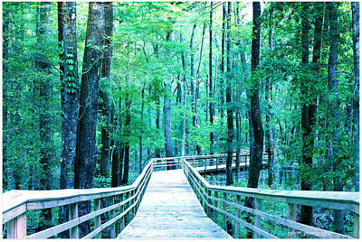 Boardwalk Into The Woods Print by Chris Short