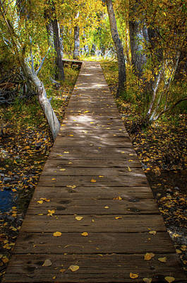 Convict Photograph - Boardwalk Over Convict Creek by Ralph Vazquez