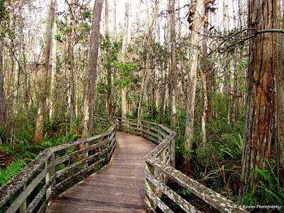 Whimsically Poetic Photographs Rights Managed Images - Boardwalk through Corkscrew Swamp Royalty-Free Image by Barbara Bowen