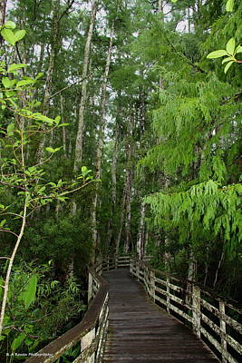 Boardwalk Through The Bald Cypress Strand Art Print by Barbara Bowen