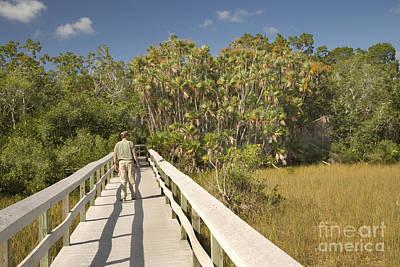 Boardwalk Through The Everglades Art Print