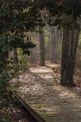 Photograph - Boardwalk Through The Woods by Liza Eckardt