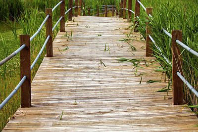 Photograph - Boardwalk Thru The Coastal Grass by Karol Livote