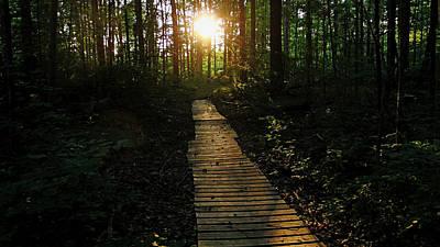 Photograph - Boardwalk To The Sun by Debbie Oppermann