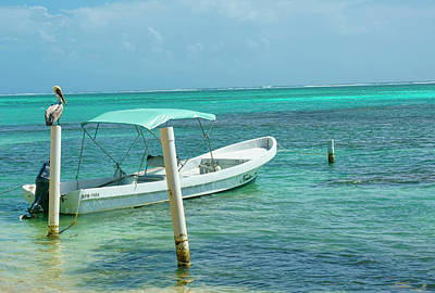 Photograph - Boat And Pelican On Ambergris Caye Belize by Waterdancer