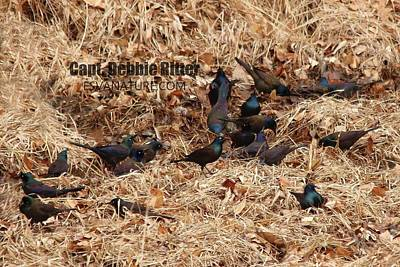 Photograph - Boat Tailed Grackle 5023 by Captain Debbie Ritter
