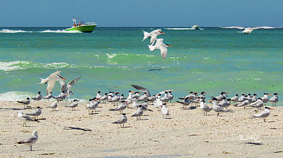 Photograph - Boats And Birds by Susan Molnar