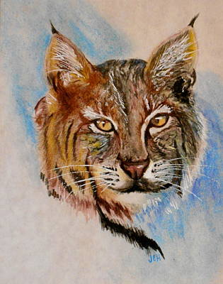 Painting - Bob Cat by Jean Ann Curry Hess