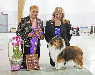 Sable Sheltie Photograph - Bob Ch Homewood In The Hamptons-1 by Chris Lynch