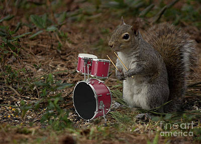 Photograph - Bob The Drummer by Sandra Clark