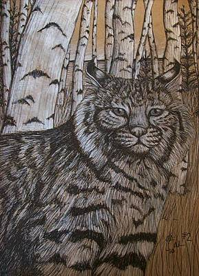 Bobcats Mixed Media - Bobcat And Birch by Olivia Hoppe