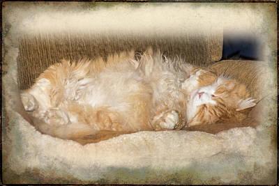 Bobcat Asleep Art Print by Mother Nature