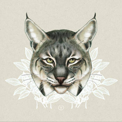Colored Pencil Mixed Media - Bobcat by Catherine Noel