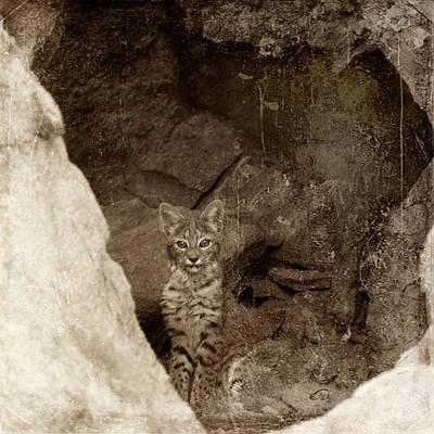 Bobcat Original by Drew Reese