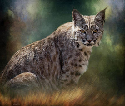 Bobcat Gaze Art Print