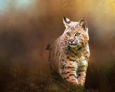 Bobcats Digital Art - Bobcat I by Susan Carter